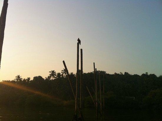 Dr. Salim Ali Bird Sanctuary: Kite