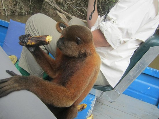 Amazonia Expeditions' Tahuayo Lodge: Boating with a friend