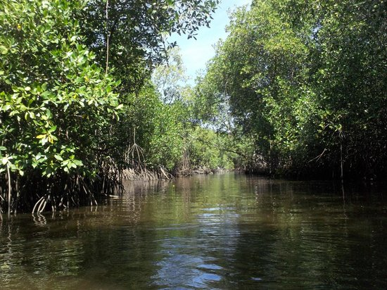 Playa Las Penitas : mangroves
