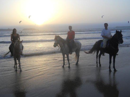 sur la plage fotograf 237 a de la maison du cheval esauira tripadvisor