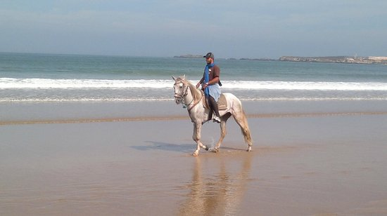 la maison du cheval essaouira morocco top tips before you go with photos tripadvisor