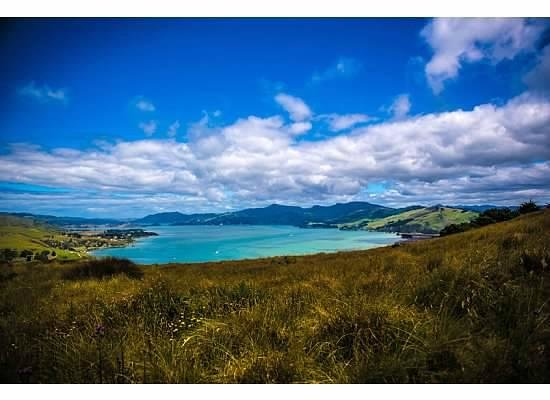 Awesome Tours: Dunedin