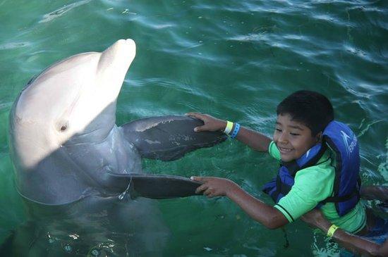 Dolphin Explorer: Mi hijo Mauricio bailando con el delfin