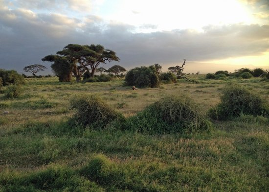 Amboseli National Park : Look closely