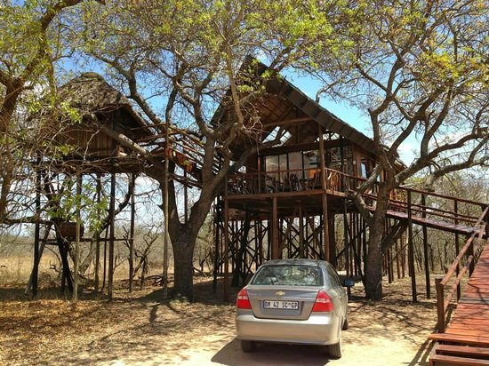 Pezulu Tree House Game Lodge : Marula tree house.