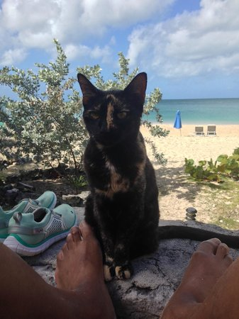 Fernandez Bay Village: The cat that came with our Cat Island room