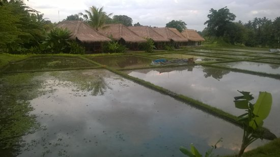 Sapulidi Bali Resort & Spa: paddy field