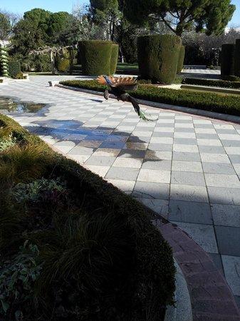Parque del Retiro: Jardine de Cecilio Rodriquez