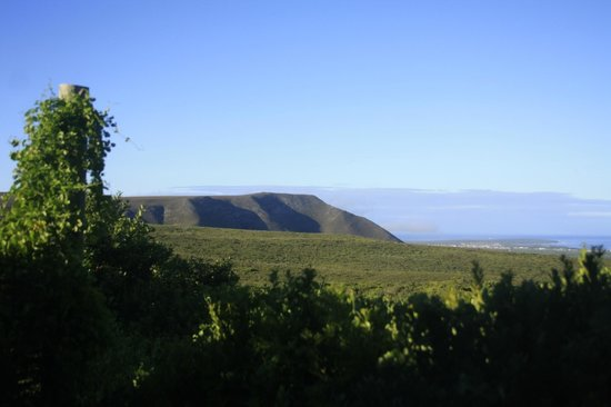 Grootbos Private Nature Reserve: Everyday´s wallapaper...