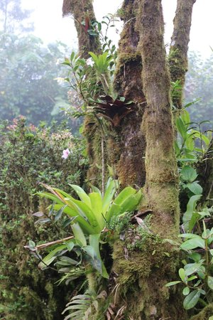 Villa Blanca Cloud Forest Hotel and Nature Reserve : Riot of plant growth