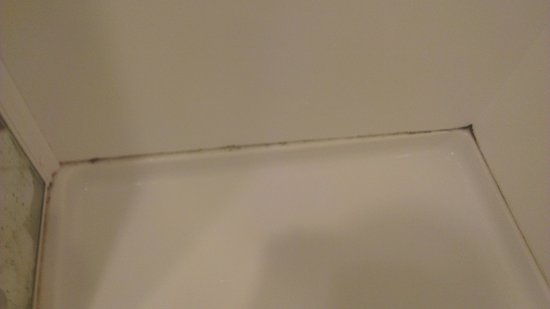 West Fitzroy Apartments: Mould in shower