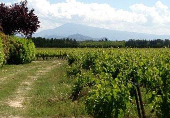 Mas du Clos de l'Escarrat : View from Vineyard