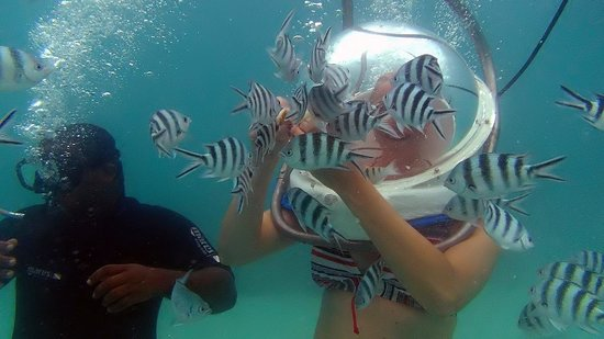 Mauritius Attractions Day Tours Fish Feeding Underwater