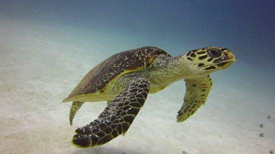 Euro Divers Sheraton Maldives: Coral garden