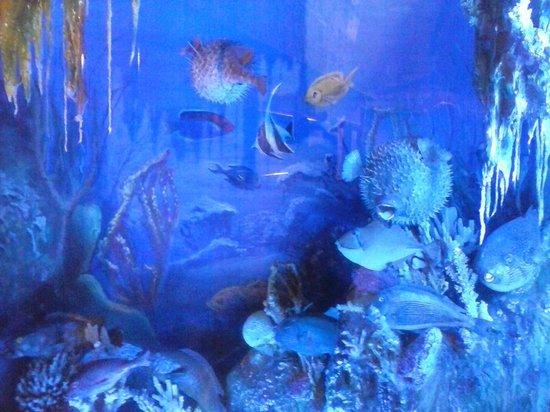 Aquarium Museum