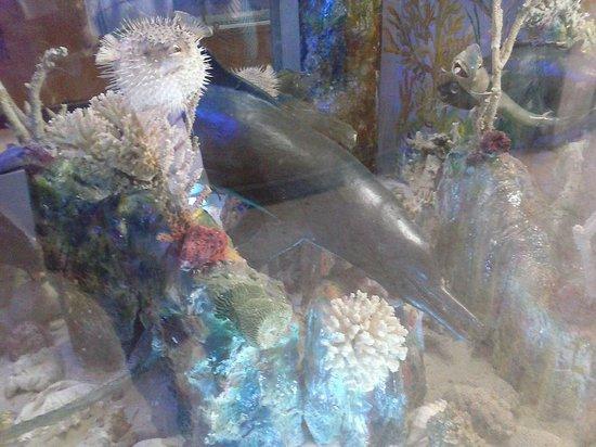 Whale Skeleton Picture Of Aquarium Museum Alexandria