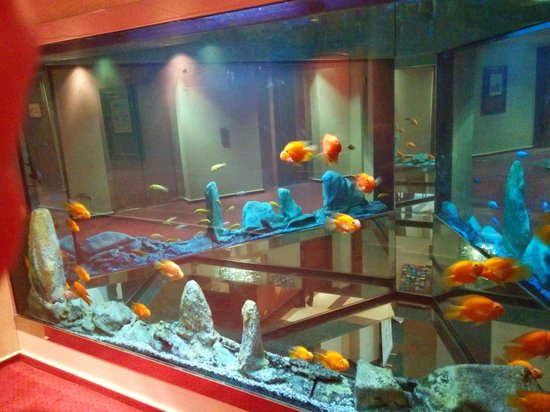 Fish tank picture of coppid beech hotel bracknell for Fish hotel tank