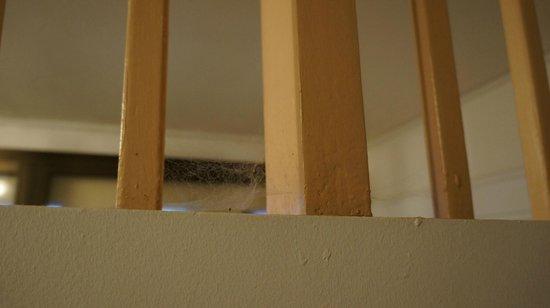 Hotel Brasilito : more spider webs