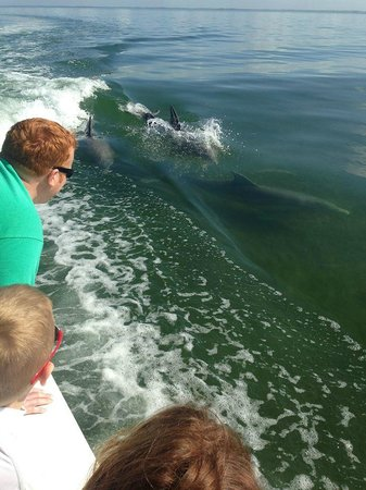 Captain Randys Fishy Business : Kids loving how close the dophins get