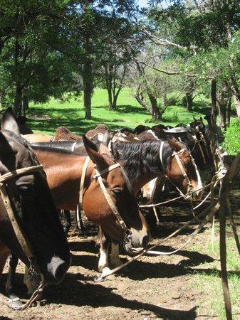 Dos Lunas Horse RIding Lodge : los caballos