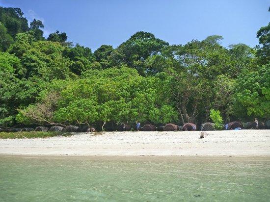 Mu Ko Surin National Park: The camping beach