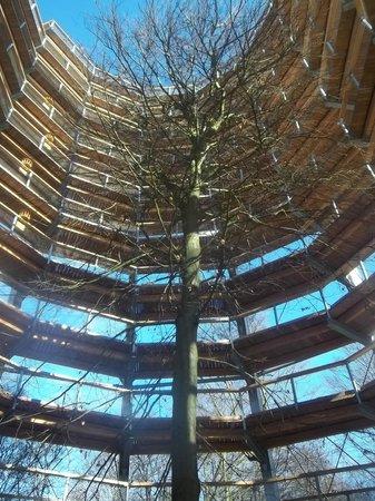 Naturerbe Zentrum Ruegen: Blick nach oben