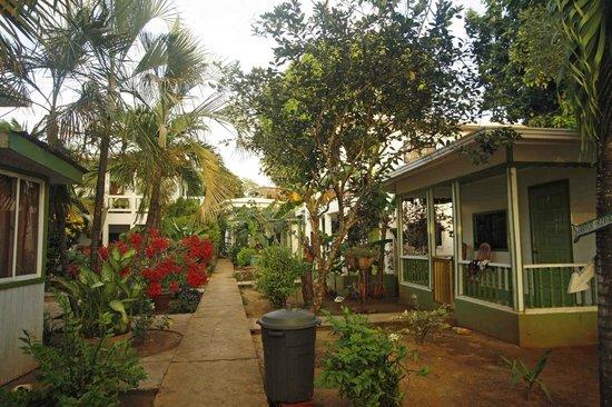 Hotel Los Delfines: giardino e bungalows