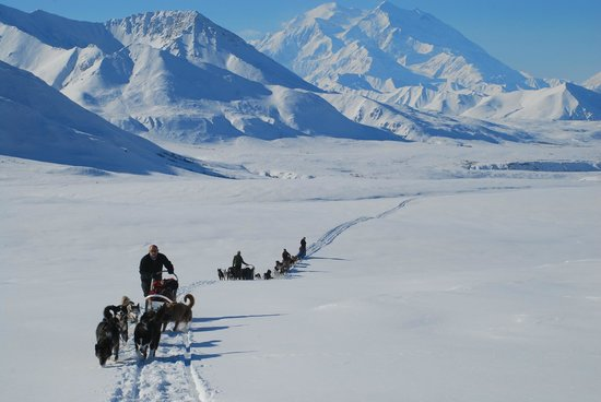 EarthSong Lodge - Denali's Natural Retreat: One of our expeditions heading through Denali National Park from Wonder Lake