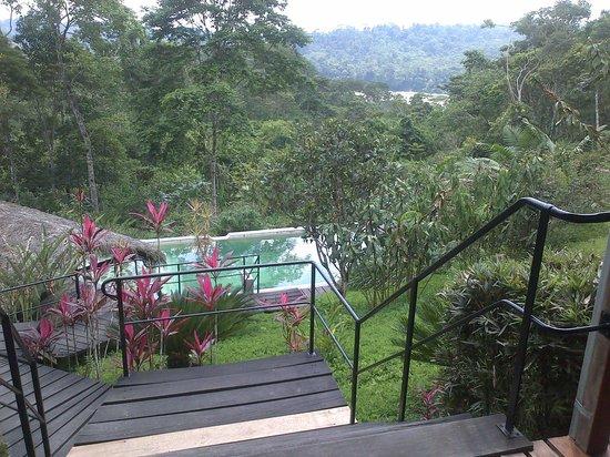 Hamadryade Lodge: vista del rio desde la colina donde esta elLodge