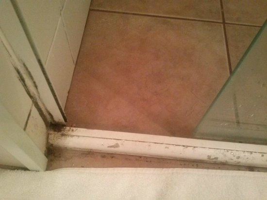 Delphin Hotel Guaruja: Sujeira no box do banheiro