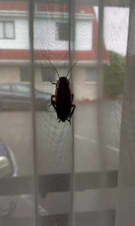 Aywon Motel: Cockroache
