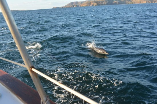 Serendipity Charters-Sailing Costa Rica: Dolphins!