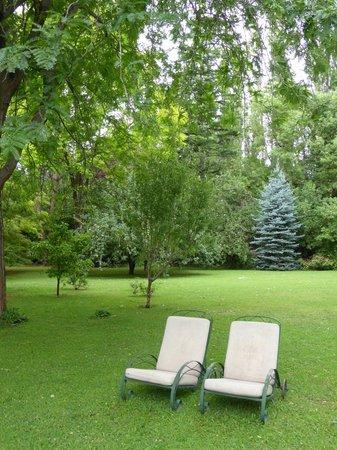 Casa Glebinias: Glorious Trees