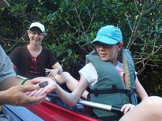Tour the Glades: baby flounder