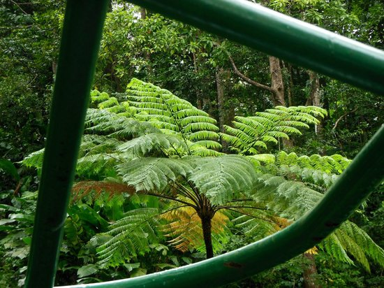 St. Lucia Rain Forest : Ferns in the Rain Forest