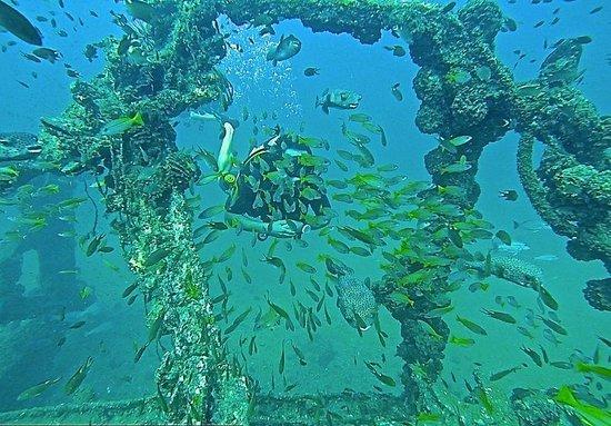 Scuba Cat Diving - Soi Watanna Shop and Classrooms: Boonsung Wreck