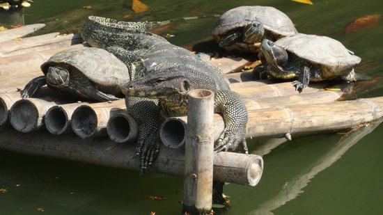 Dusit Zoo: живность в пруду