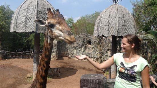 Dusit Zoo: жираф по имени бен-ладен