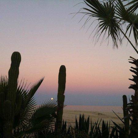 Worldmark Coral Baja: Landscape is beautiful