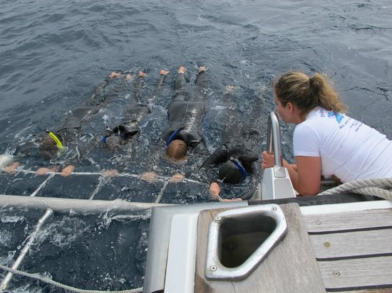 Butler's Swim With Dolphins: the careful safer