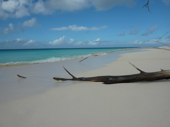Shannas Cove Resort: Man-O-War Beach