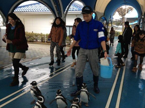 ペンギンのお散歩 - Picture of Notojima Aquarium, Nanao - TripAdvisor
