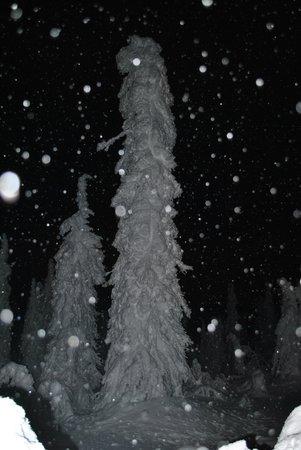 Northern Alaska Tour Company : Snow covered tree