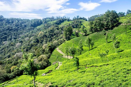 Green Magic Home : You need to see Munnar - A great Place in Kerala!