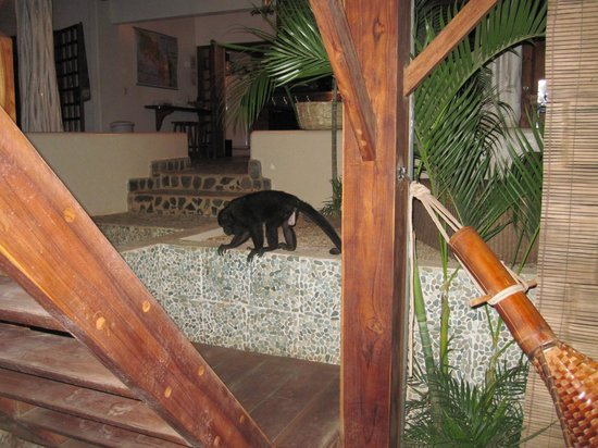 The Beach Bungalows Bed & Breakfast: Our Monkey friend