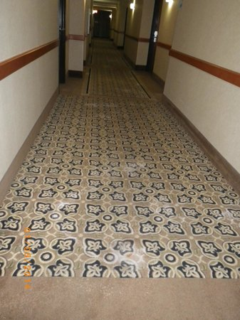 Holiday Inn Express & Suites Lakewood Ranch: Carpet stains
