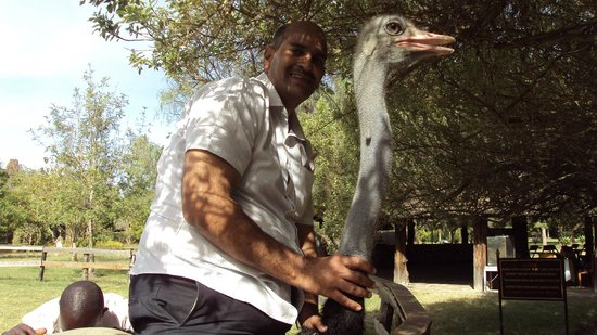 Maasai Ostrich Resort: Its a real fun to ride over an ostrich which is hard to find anywhere else