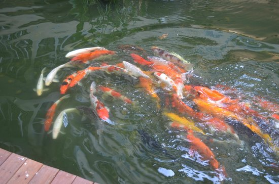 Feung Nakorn Balcony Rooms & Cafe: Beautiful variety of fishes