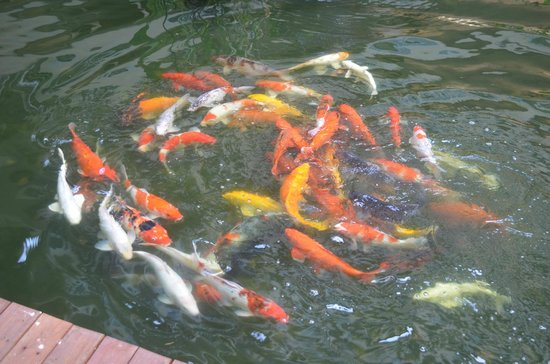 Feung Nakorn Balcony Rooms & Cafe: colorful fishes
