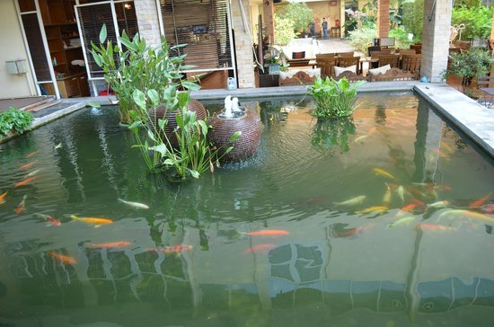 Feung Nakorn Balcony Rooms & Cafe: A Fish Pond
